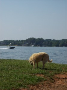 Lake Norman Charlotte NC